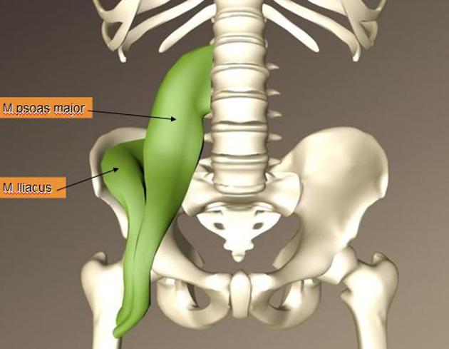 Psoas Training – für effektive, ökonomische Bewegungen und Verletzungsprophylaxe aus der Körpermitte